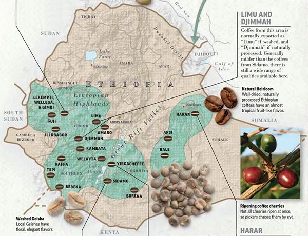 ethiopia-puriocafe-072015
